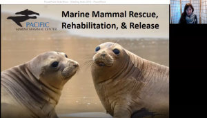 Pacific Marine Mammal Center to Offer Free Virtual Field Trips