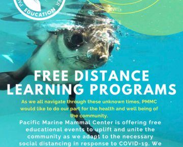 Pacific Marine Mammal Center Free Live Virtual Field Trips